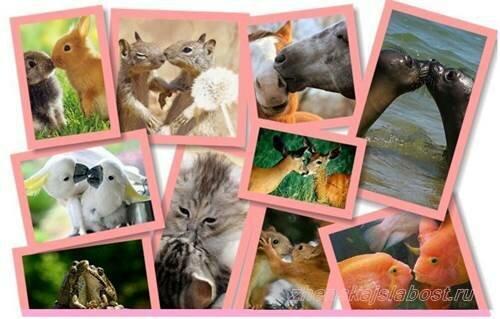поцелуи в мире животных