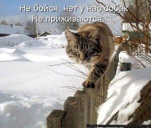 http://img-fotki.yandex.ru/get/6724/194408087.5/0_b120e_e474c998_M.jpg