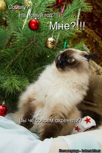 http://img-fotki.yandex.ru/get/6724/194408087.5/0_b322a_e3a1d61b_M.jpg