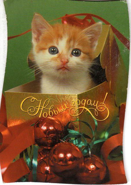 Котенок-подарок. С Новым годом!