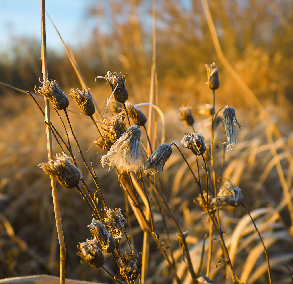 Осенний натюрморт 1. Снято на Nikon D5100 + объектив???