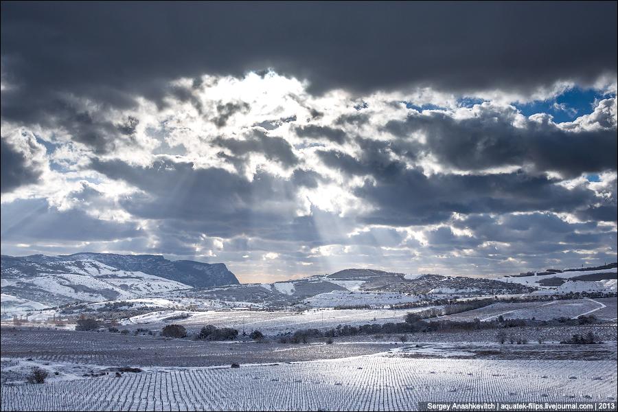 Зима на виноградниках