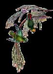 птицы 1.png