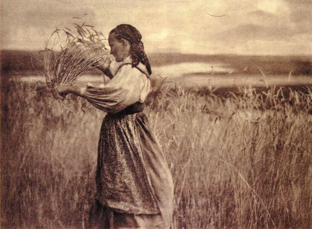 Рожь поспевает. Фото С.А. Лобовикова. 1926-1927 гг.