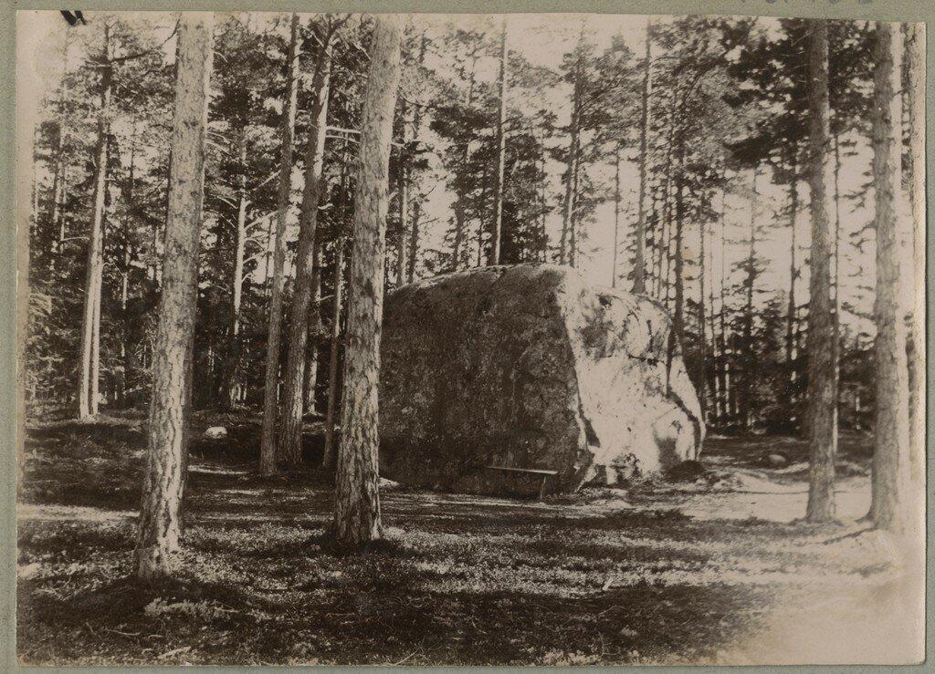 1900. Большой валун в лесу, вероятно, так называемый Отшельник - крупнейший валун в окрестностях Кясму
