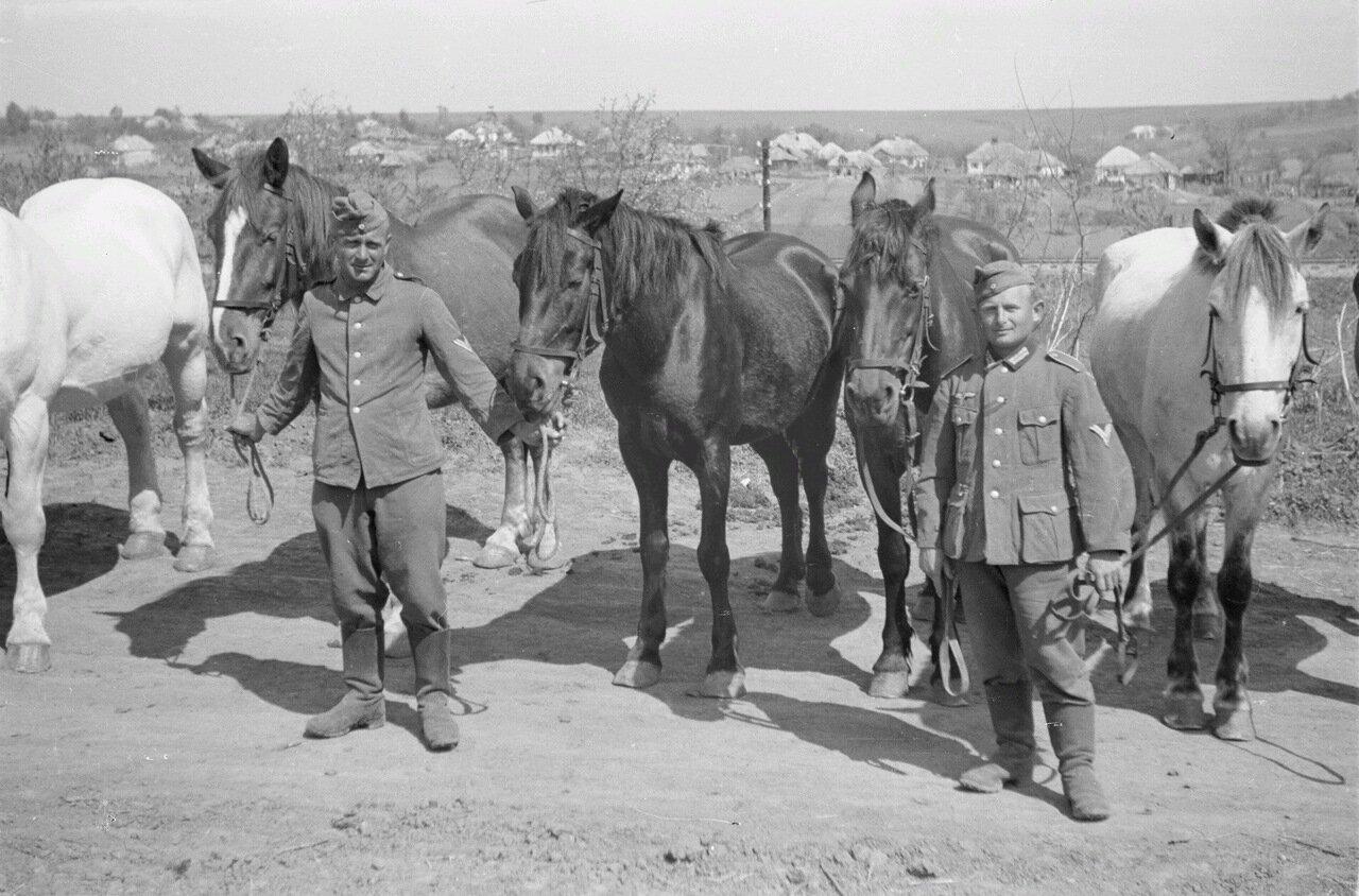 Белгородская область. Солдаты с лошадьми