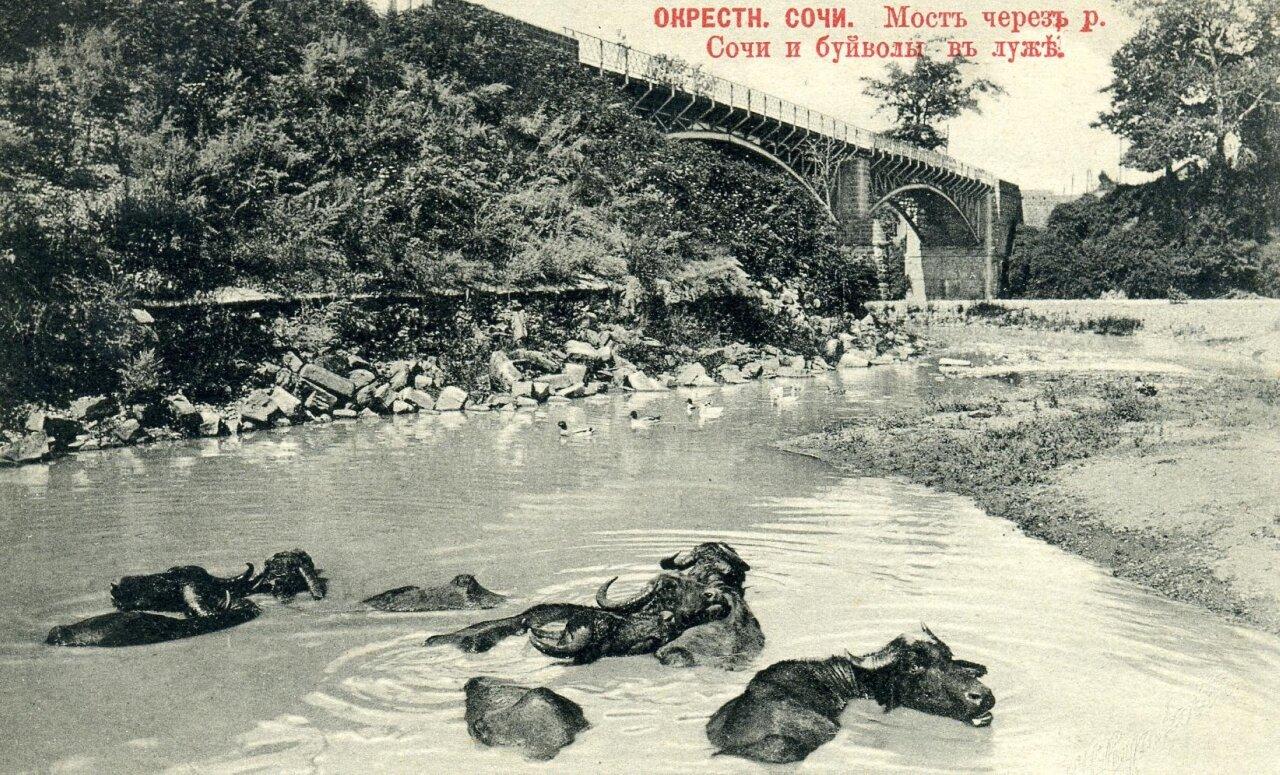 Мост через реку Сочи и буйволы в луже