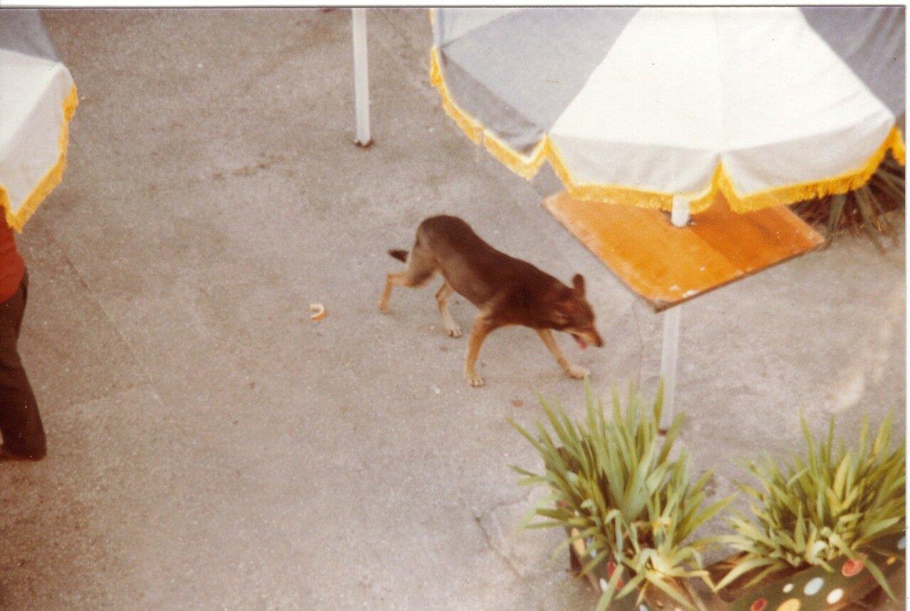 Сухумский пес