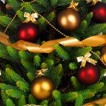 Spruce (2).jpg