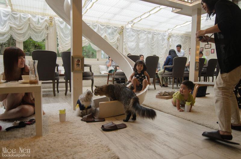 purr cat cafe club, bangkok