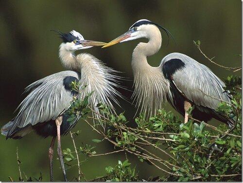 Удивительные и необычные птицы всего мира