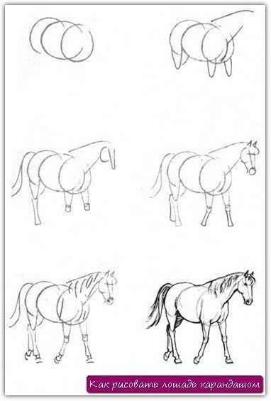 Нужно уметь рисовать лошадь не