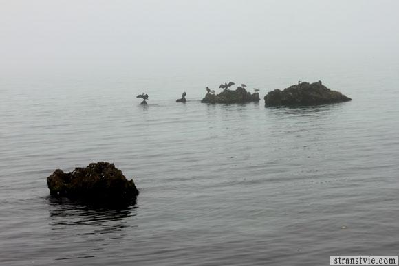 Птички в тумане