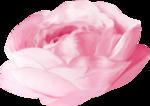 NLD Rose 6b.png