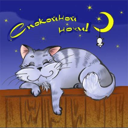 Спокойной ночи! Киса спит на заборе