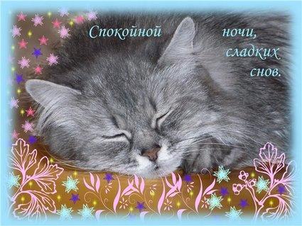 Спокойной ночи. сладких снов! Киса спит открытки фото рисунки картинки поздравления