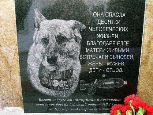 Собака-герой