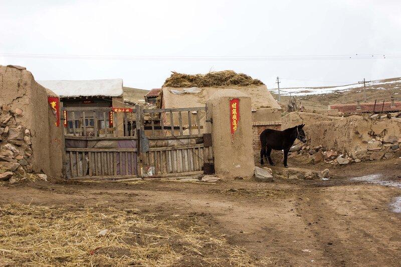 ворота, дворик и осел во внутренней монголии, китай