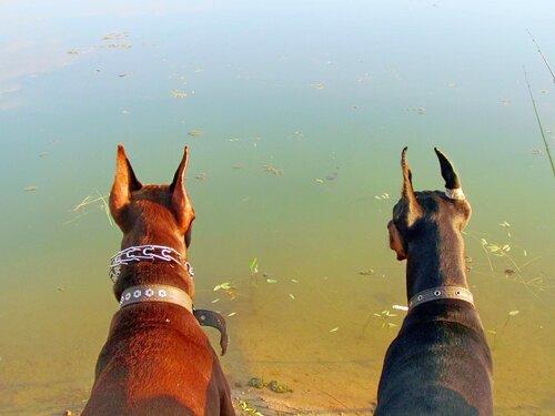 Ожидание рыбки