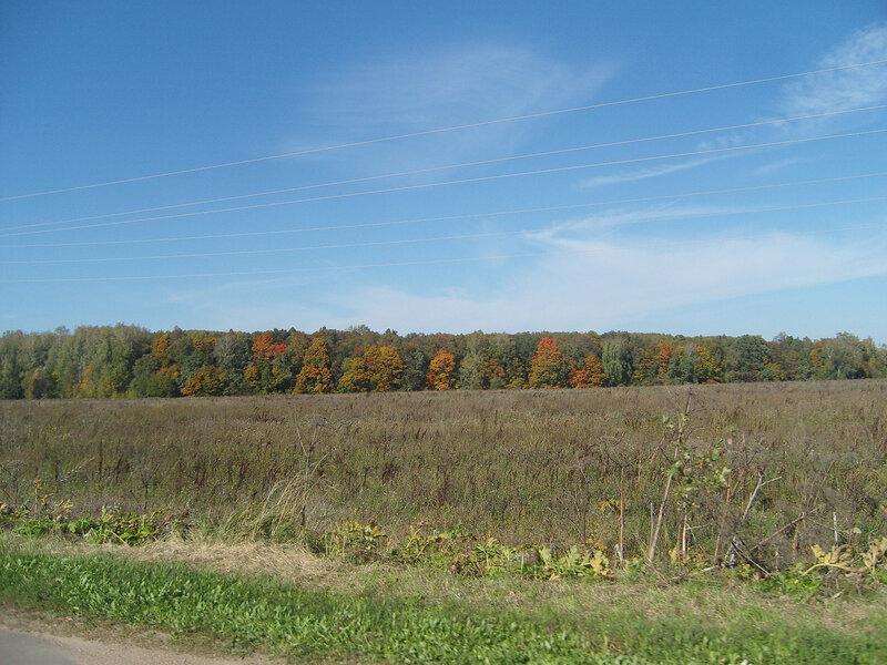 цветные листья осени