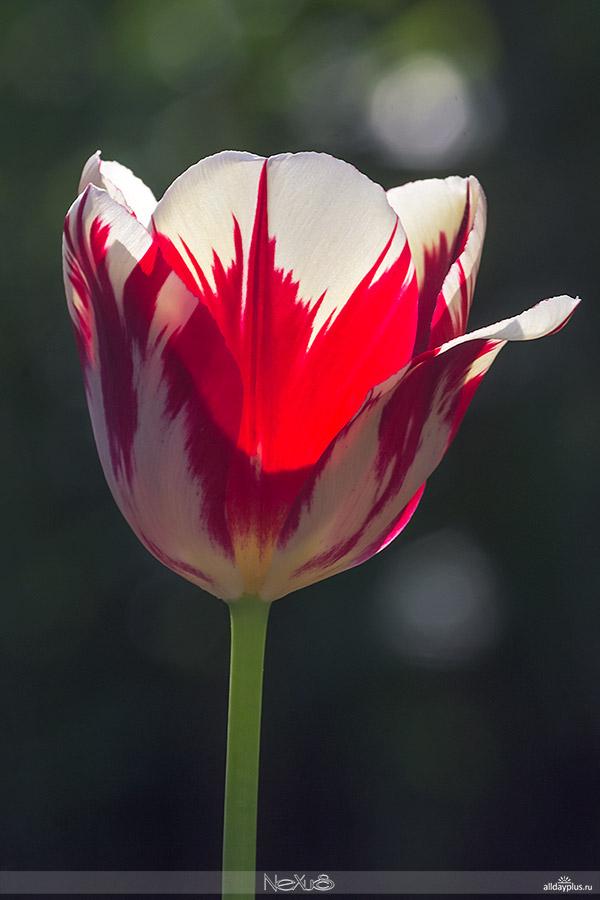 Я люблю все цветы, часть 39