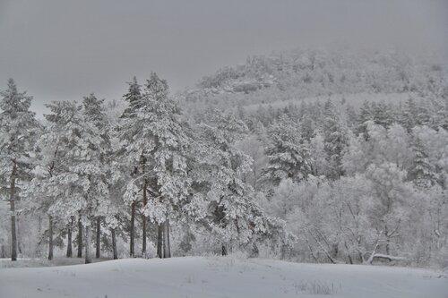 Синие скалы (республика Башкортостан) в январе. Автор фотографии - Эльвира Черных