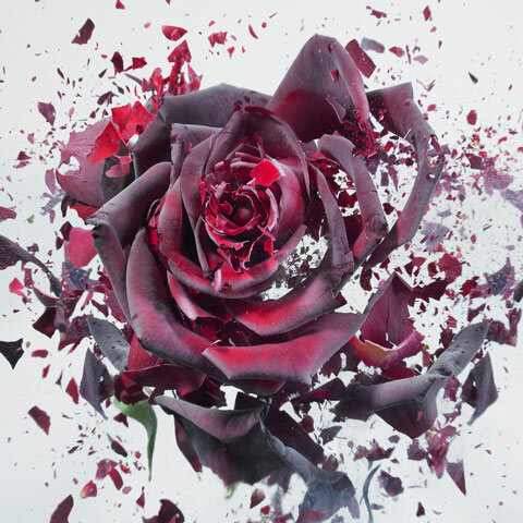 Хотите испортить цветы в необычном и красивом стиле?