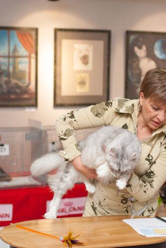 """Международная выставка кошек AFC """"Удивительные лесные кошки"""", 1 марта 2014 г. Сургут 0_b265e_a849ca58_L"""