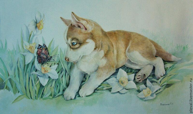 Картина акварелью Портрет щенка хаски в нарциссах