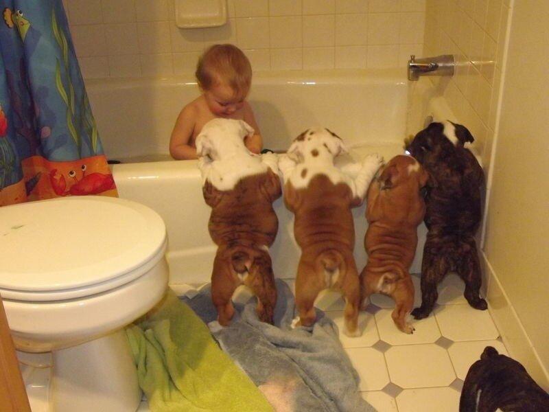 babies-pets-1.png