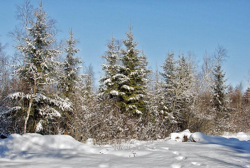 Зимняя красота