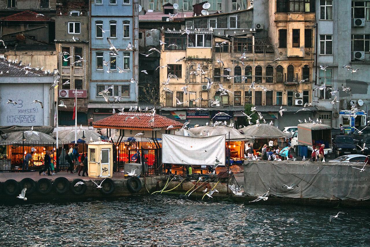 Стамбул чайки