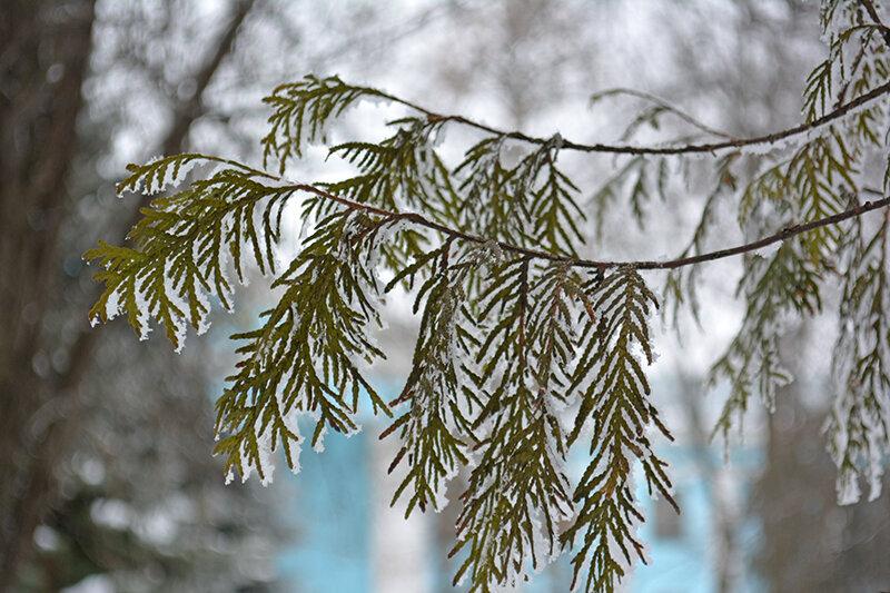 вновь зима
