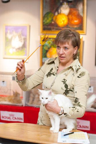 """Международная выставка кошек AFC """"Удивительные лесные кошки"""", 1 марта 2014 г. Сургут 0_b2587_3bfffc28_L"""