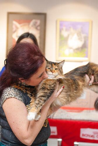 """Международная выставка кошек AFC """"Удивительные лесные кошки"""", 1 марта 2014 г. Сургут 0_b2604_5a6965af_L"""