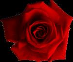 Holliewood_RoseIsARose_Rose24.png