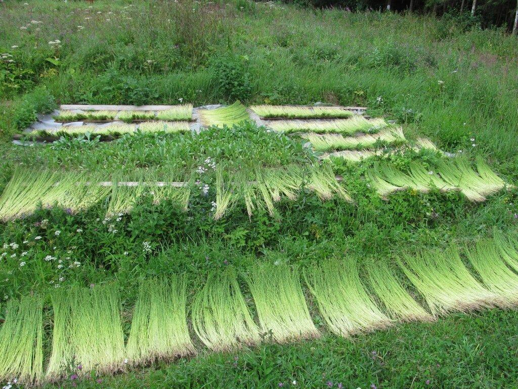 Специалист по выращиванию льна 5