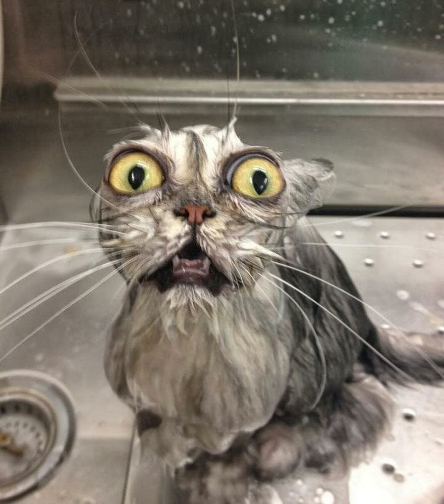 Фото мокрой котенка 14 фотография