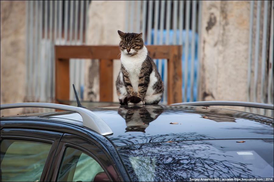 Стамбульские котики