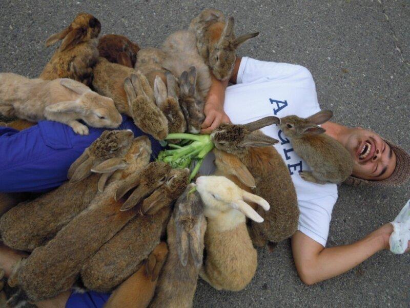 Остерегайтесь голодных кроликов
