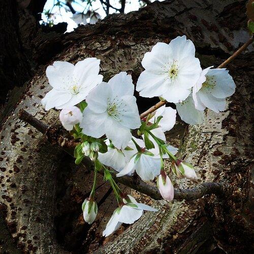 Весна в Тильбурге