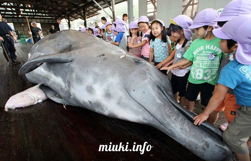 В меню японских школьников вернулось китовое мясо