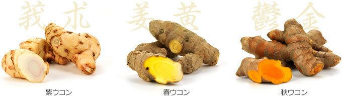 Секреты долгожительства с Окинавы - Укон (куркума)