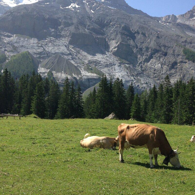 Классика альпийских лугов:)