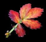 thaliris_flowers_el09a.png