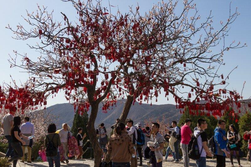 Дерево желаний, парк Сяншань, Пекин