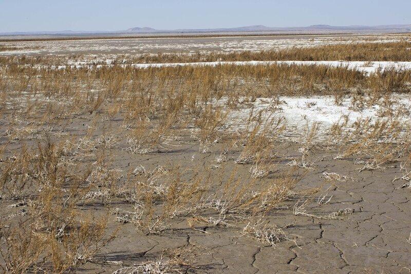 соленое болото озера Цаган Нур, внутренняя монголия, китай