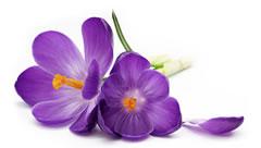 Фотоконкурс «Весна на ладошке». 0_8f504_a03e651b_orig