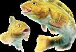 рыба (67).png