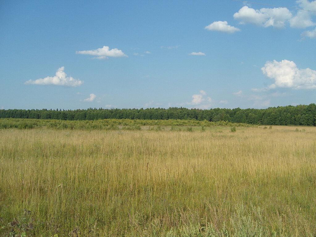 лес и мини-лес -)